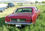 Cliffs 69 Mustang