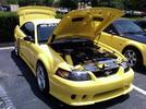 Mustang Week