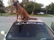 :) Puppy Power!