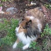 The garden sitter