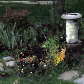 Bird Bath area with Iris Nancya Lace