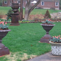 Mid April and the urns by the patio are in bloom