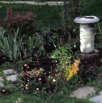 Bird Bath area with Iris Nancya Lace