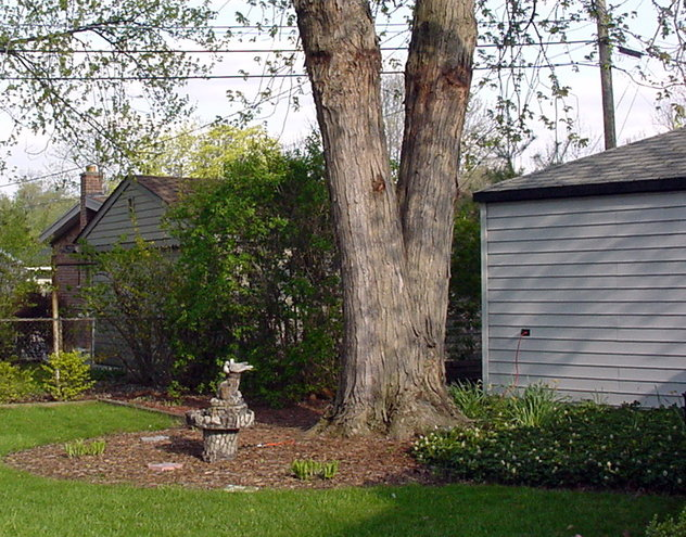 April--2002.  Maple Tree before we moved in.