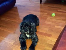 Paisley (and her tennis ball, her addiction!)