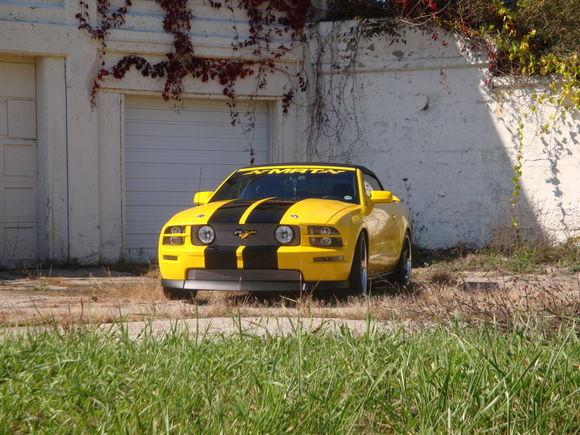 Mustang at Hines