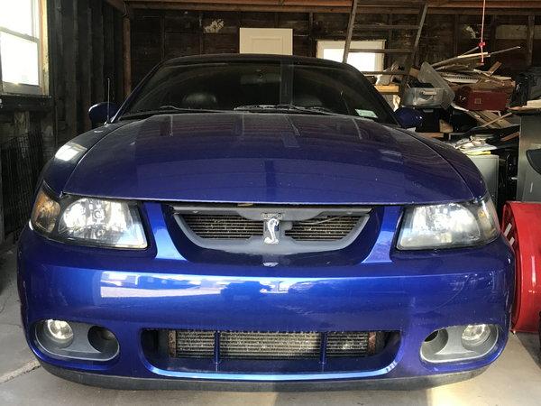 2003 Mustang cobra terminator for Sale in BAY SHORE, NY ...
