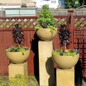 3 pedestals & pots