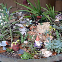 Mini garden in old fire pit