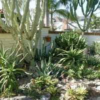 Aloes and Euphorbias