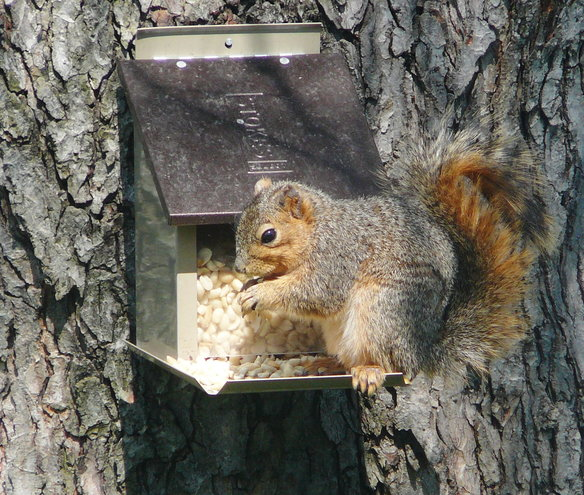 Could Mr. Squirrel be any cuter??