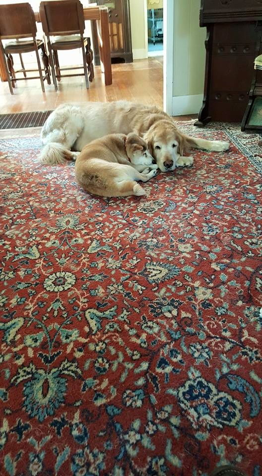 Shiba Inu Cats Getting Along