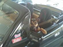 Aspen is a happy pup!