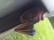 Found a dead bat in my faux vent one day. I felt bad. Had to get down and dirty to get it out of there because I didn't want to tear it's body apart just to get it out.
